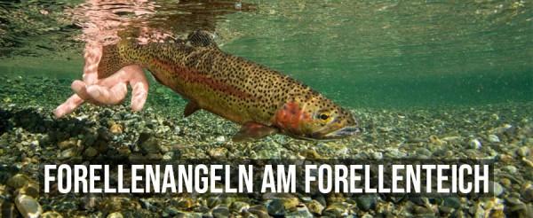 Regenbogenforelle-angeln-am-forellenteich-Forellenangeln-Forellenhof-Forellensee-Forellenanlage-Aquakultur-Header-Titelbild