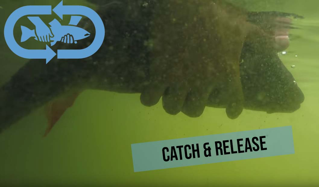 Catch-and-Release-Barsch_final
