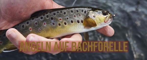 Bachforelle-angeln-Bach-Forelle-tipps-deutschland-k-der-schonzeit-kapitale-kleiner-Bach-wobbler-Header-Titelbild