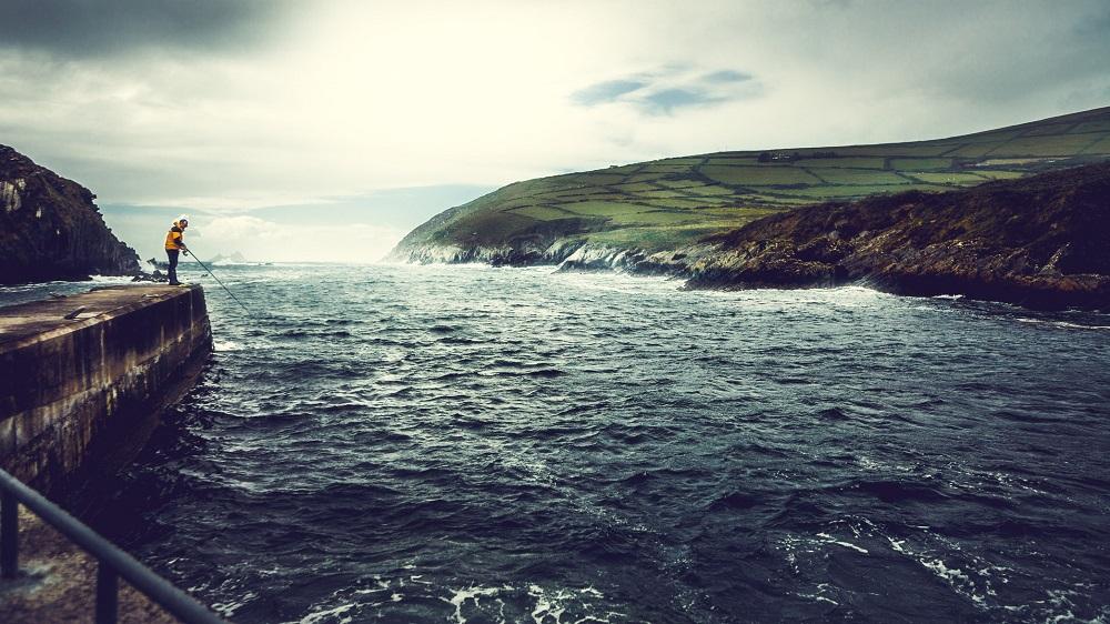 Flussm-ndung-Irland-Wolfsbarsch