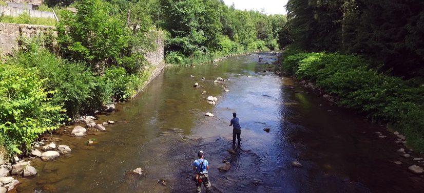 Fliegenfischen für Anfänger: Das Gewässer Chemnitz ist leicht zu befischen