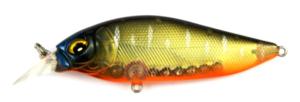 krabatzke_regenbogenfisch_1